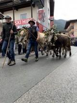 Besitzer und Vieh auf dem Weg...